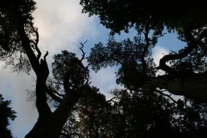 Bäume aus einer anderen Perspektive fotografieren