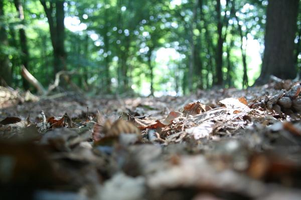 Im Herbst gute Fotos schießen
